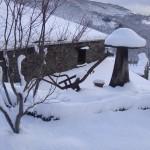 Detalle nevada en jardín