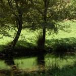 Río Ser